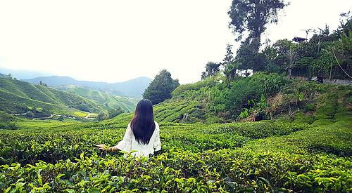 Tung hoành xứ sở Quạ đen: Cameron Highlands & Melaka - OKY vn